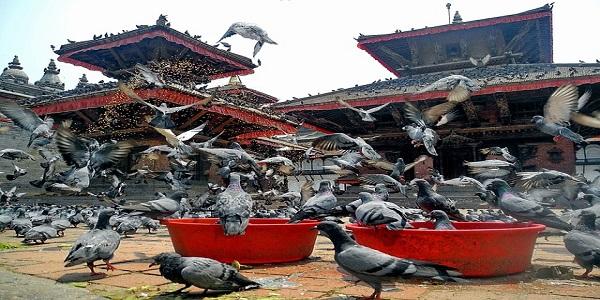 kathmandu nepal birds pigeons temple architecture